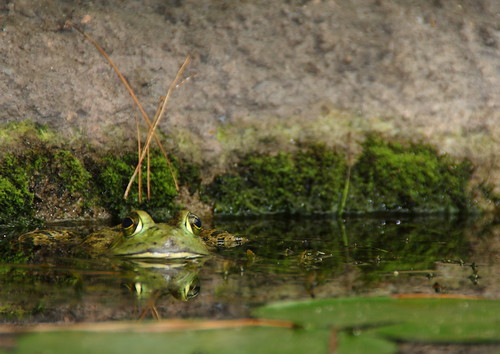 nc pond northcarolina carolinabeach ftfisher ftfisheraquarium
