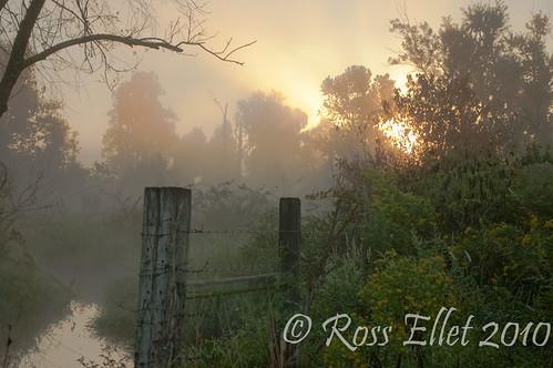 morning flowers trees light fall water fog sunrise fence steam arkansas ozarks