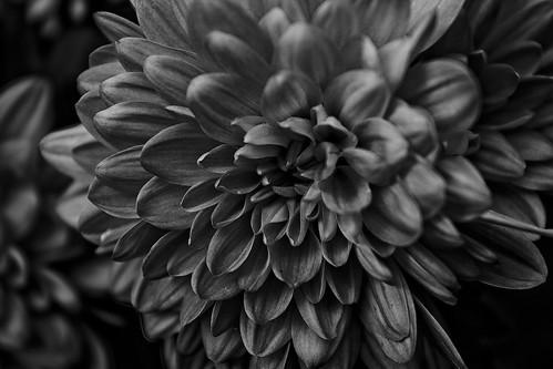 IMG_6454 | by thronx