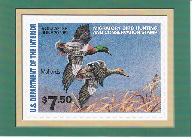 USPS The Federal Duck Stamp Collection Mallards Postcard