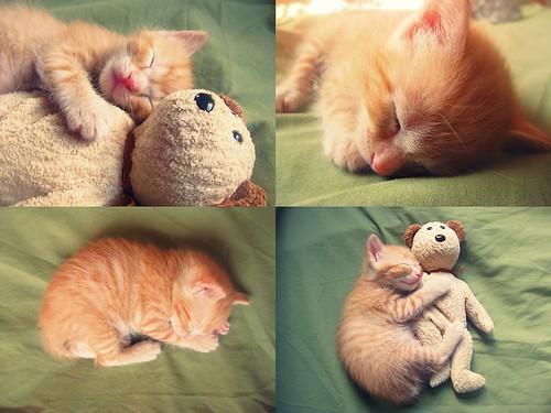 kitty | by liazel