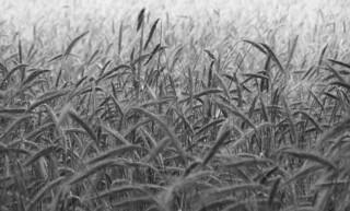 Getreide | by csf-