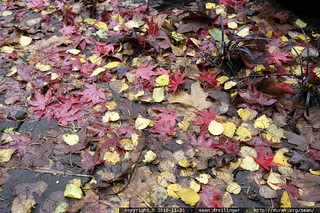 autumn leaves - only remaining on the ground - MG 2640.JPG | by sean dreilinger