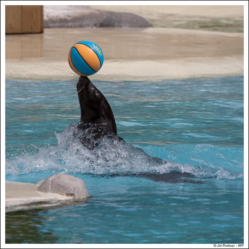 Lion de mer (jonglage)