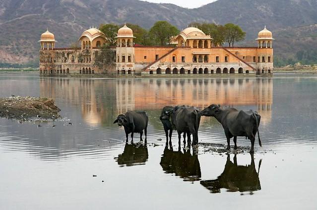 Beautiful water reflections. Джайпур. Дворец на воде. Индия