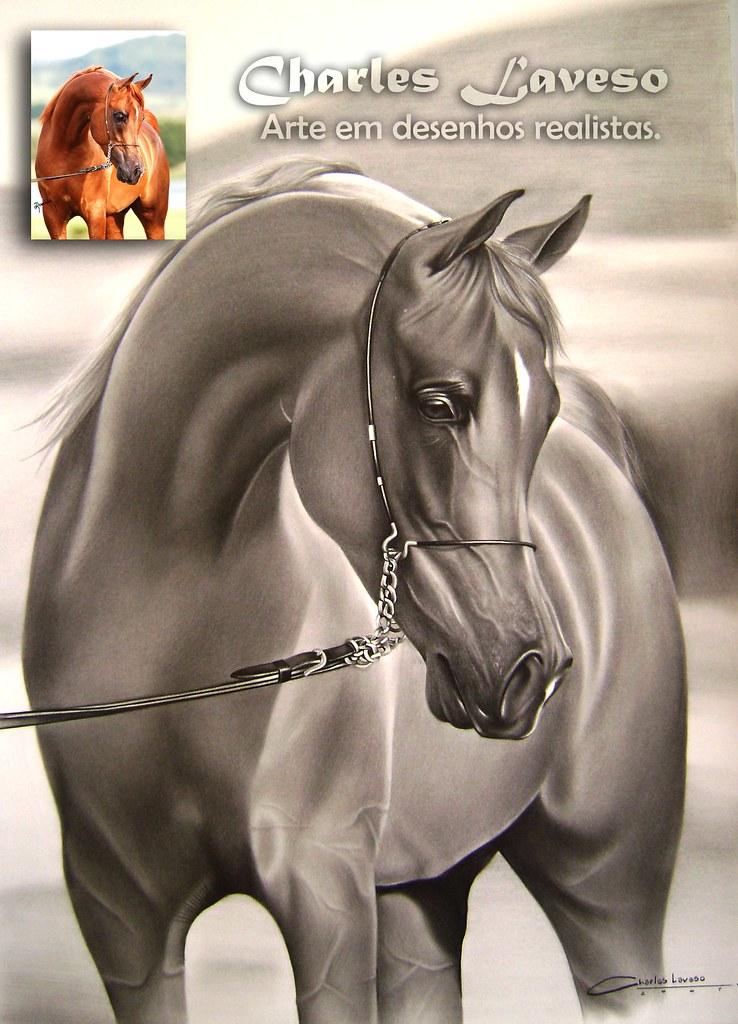 Desenho De Charles Laveso Desenho De Cavalo Arabe Flickr