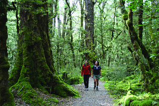 Walking among giants - Milford Track | by Department of Conservation