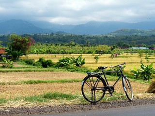 Bicycle and Rice Fields | by chrisstreeter