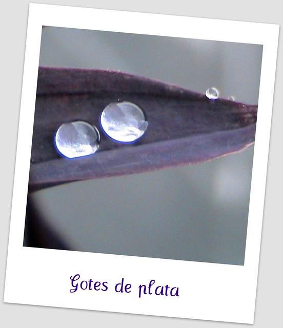 GOTES DE PLATA
