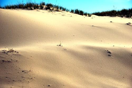 photo capecod massachusetts sanddunes nationalseashore headofmeadowsbeach