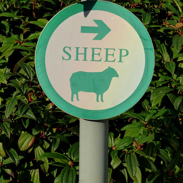 So Sheep Can Read?