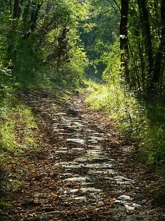 Bagno a ripoli strada romana nel bosco al di sopra del - Case di san romolo bagno a ripoli ...
