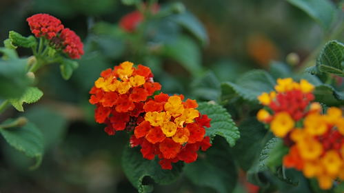 Zakros - Blumenschoenheiten am Strassenrand