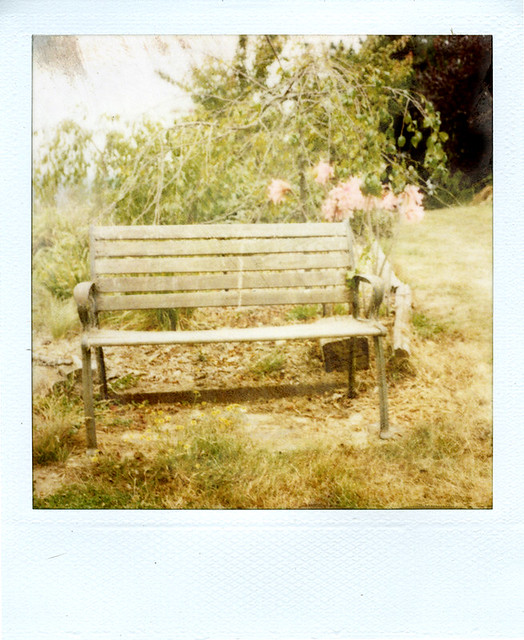 the bench and amaryllis