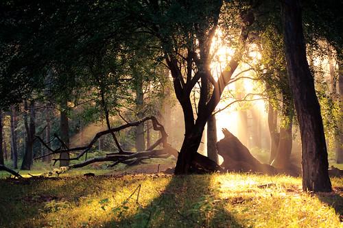 lighting morning trees light summer england sun mist nature misty fog fairytale forest sunrise landscape golden countryside kent woods nikon ethereal flare rays sunrays wonderland storybook magical 70200 f28 enchanted d3