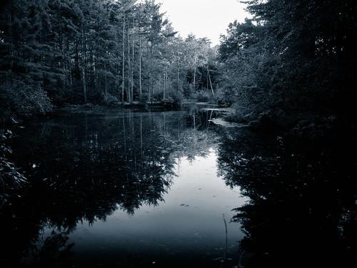new trees england blackandwhite reflection pine ma pond massachusetts carlisle 2010 greatbrookfarm greatbrookstatepark