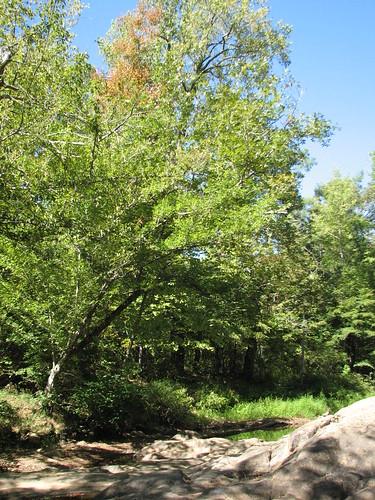Duke Forest G25 9168   by bobistraveling