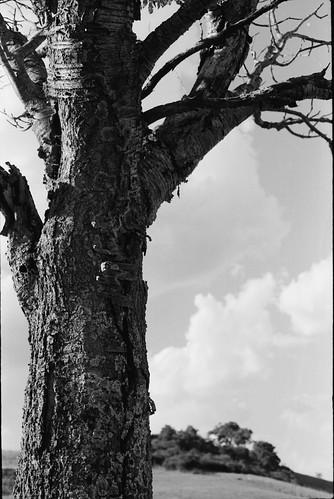 Ultima estate del ciliegio morente by Blackeyedog