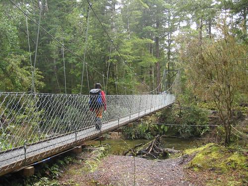 Forest Burn - Kepler Track | by Department of Conservation