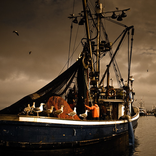 color dark washington westport schnoor commercialfishing