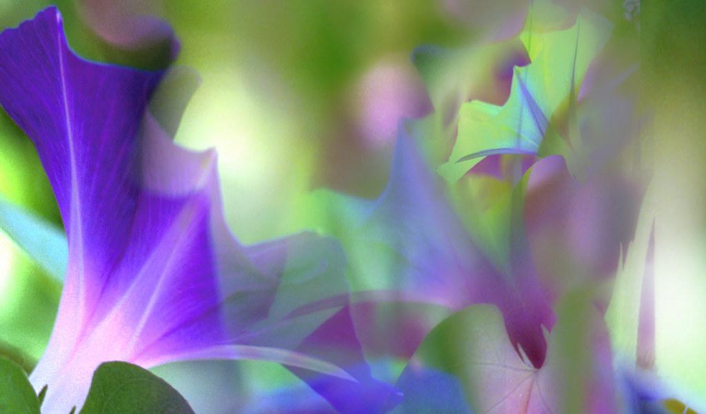 Green violet fantasy
