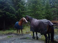 Hestene
