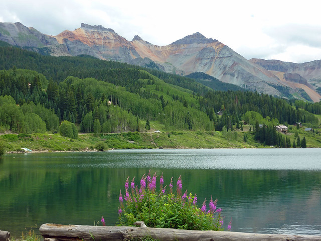 Fireweed on Trout Lake near Telluride