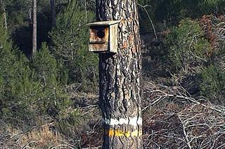 Senda de la madera   by comunitatvalenciana