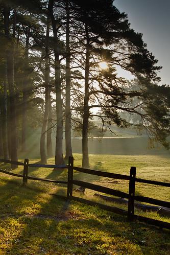 park ohio sunlight fog pine oakwood dayton kettering metropark