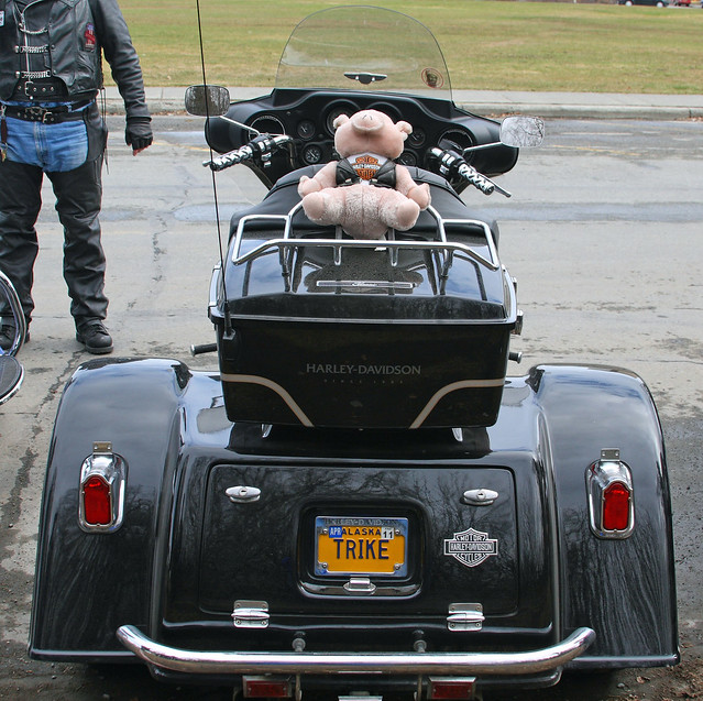 Harley trike with a pink pig???