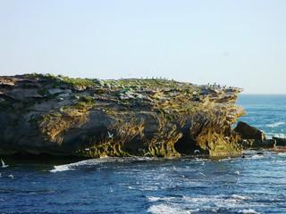 merri island birds