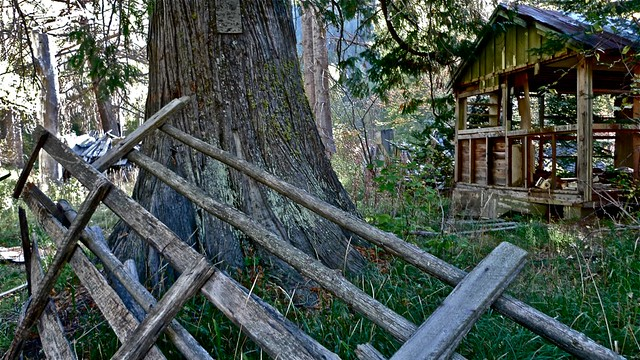 Old cabin near Skykomish River, Northeastern Washington, 2010