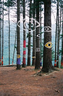 The Painted Trees - Great Eye
