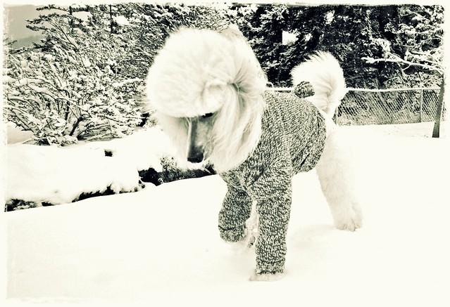 Dashing through the snow 46/52