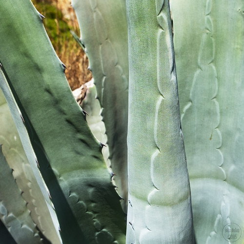 cacti ... 30/52 | by John FotoHouse