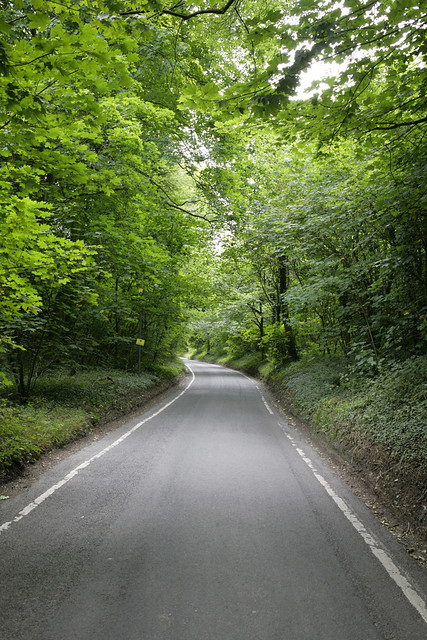 The road of trees
