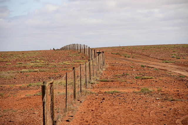 keeping out the dingoes