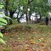 NW nel Trail della Roscetta