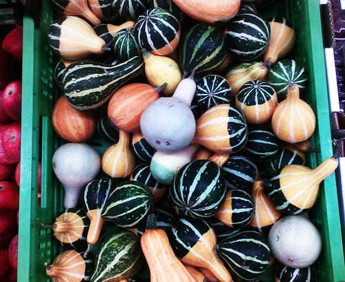 delle zucchine