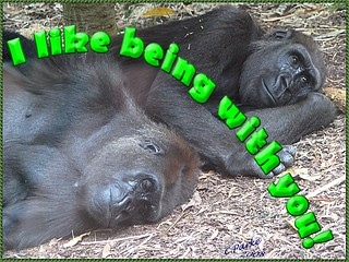 eCard: Love & Friendship - gorillas: I like being with you | by you get the picture