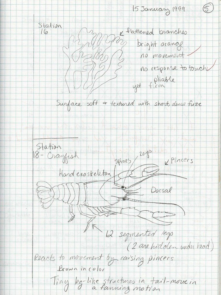 Submission #2: Composition Book Inverterate Biology (examp… | Flickr