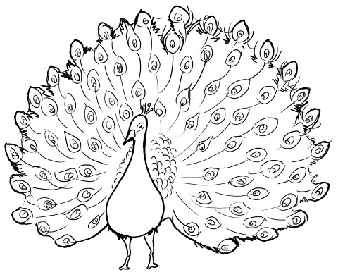 drawing-dancing-peacock-2-lineart | fuzzy_flowers | Flickr