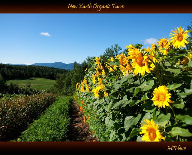 New Earth Organic Farm