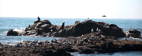 ocean california humboldt pacific anniversary seals 2010 lostcoast sheltercove benbow