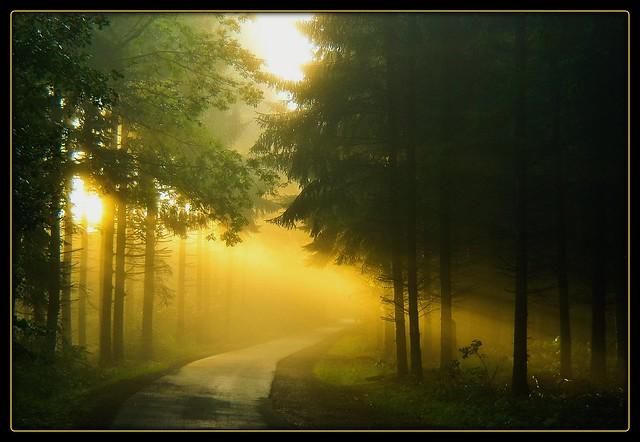 Nachhauseweg - magical morning