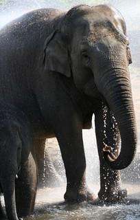 Elephants at Dublin Zoo - 14 | by Wiblick