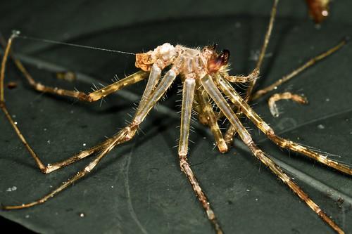 Spider exoskeleton