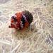 acorn knit2