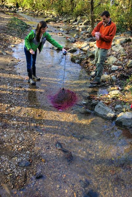 Korey Harvey, Dr. Evan Hart, Dye Trace, Breedings Mill Branch, Ensor Sink Natural Area, Cookeville, TN