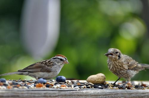 Bird   by likeaduck